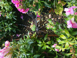 a radial sprinkler added between plants